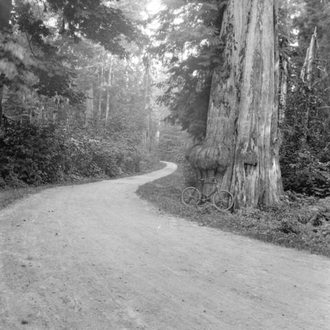 Vancouver seeks tenders for construction of hospital, road around Stanley Park – October 10, 1887